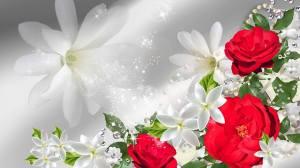 ovely roses